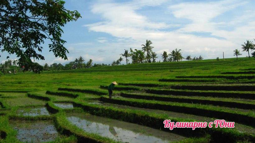 Оризови полета в Бали